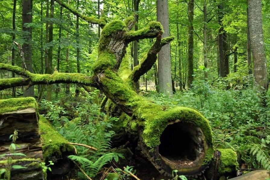 Promenons-nous dans les « vieilles » forêts
