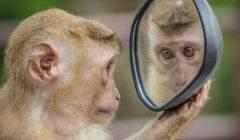 Certains animaux, macaques, dauphins et pigeons, par exemple, se reconnaissent dans le miroir. a_m_o_u_t_o_n /Pixabay, CC BY-NC-ND