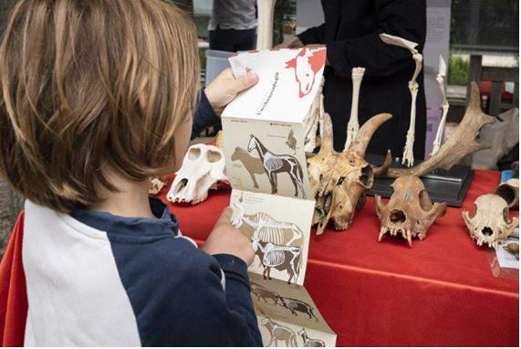 La communauté des archéologue fait découvrir son travail (photo JNA)