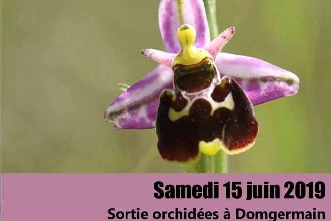Sortie orchidées avec Flore 54