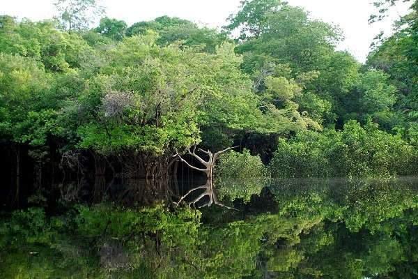 L'Amazonie, un sanctuaire vert (Par LecomteB — Travail personnel, CC BY-SA 4.0,