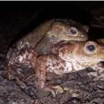 La vie surprenante des amphibiens (photo Flore 54)