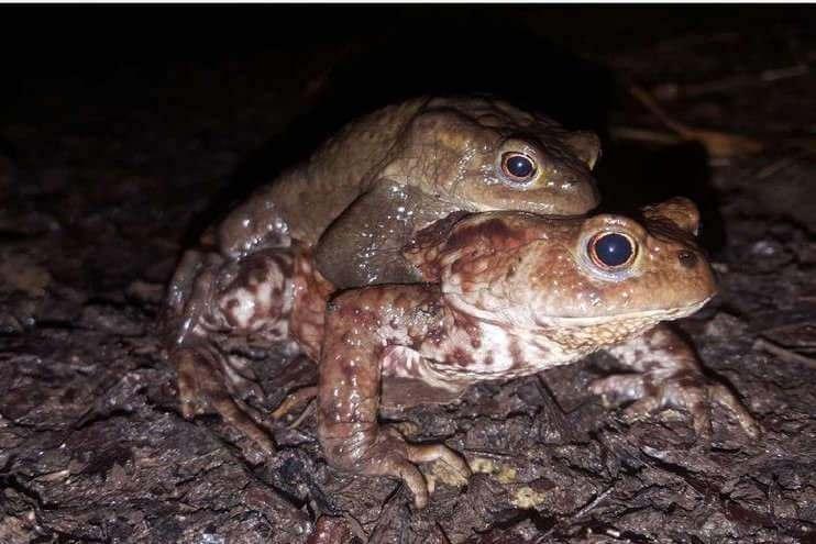 Découverte des amphibiens avec Flore 54