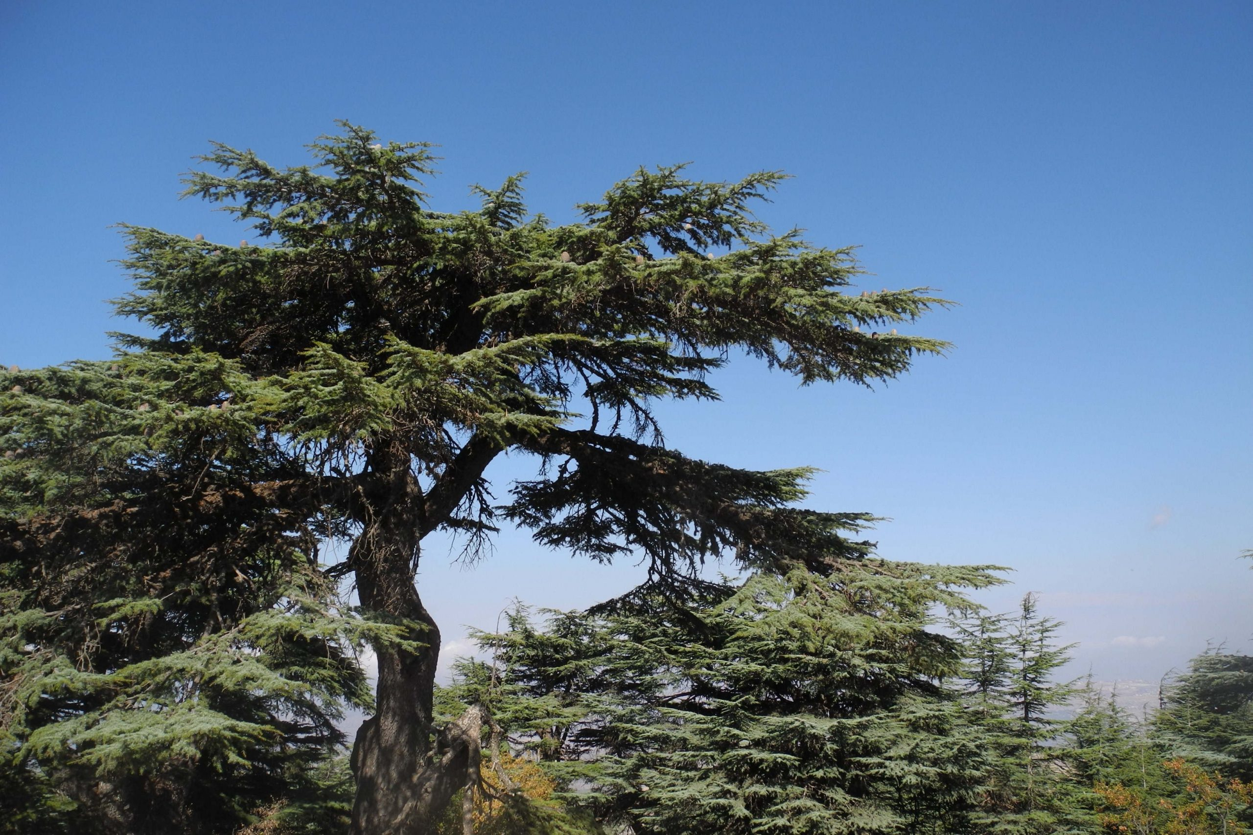 Octobre- 2019-Chouf-Réserve-cèdres-Al-Shouf au Liban (DR)