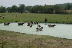 Eté 2003 : des chaleurs difficiles à supporter pour les hommes comme pour les animaux (wiki media Commons)