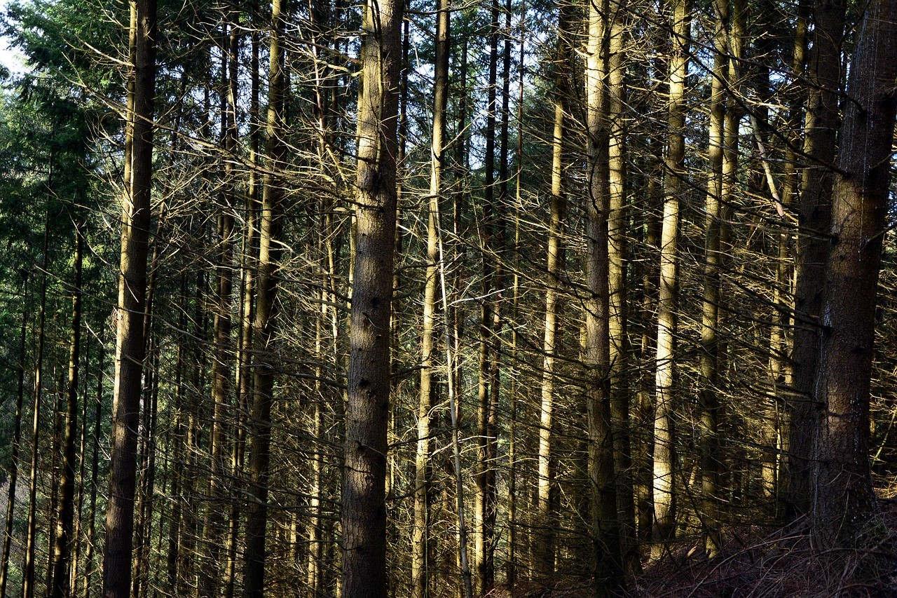 Forêt sècheresse