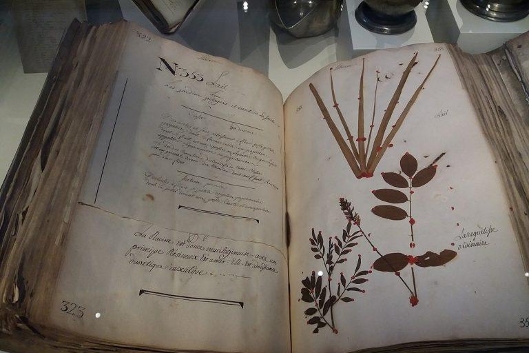 Photo d'illustration : Herbier ou jardin sec, Hôtel Dieu de Lyon (wikimedia commons)