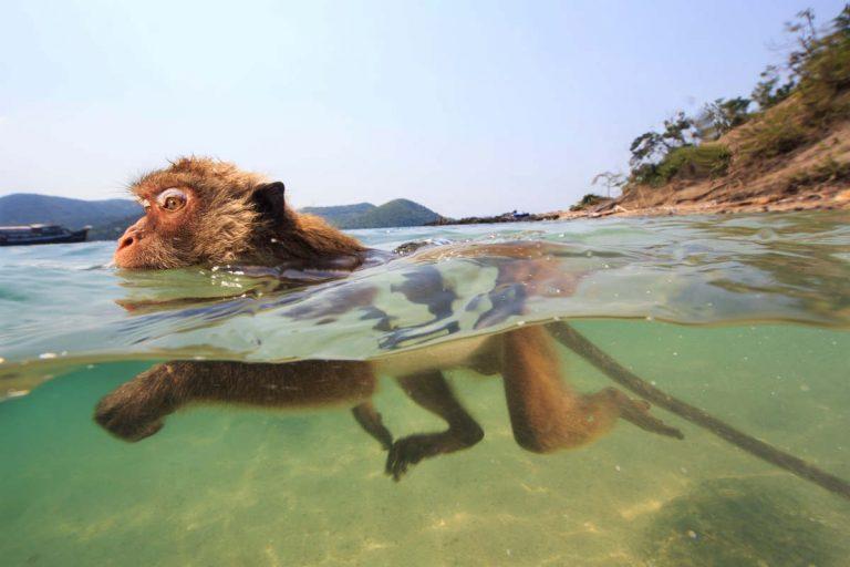 Les singes qui voulaient voir la mer (un film de Dominique Hennequin)